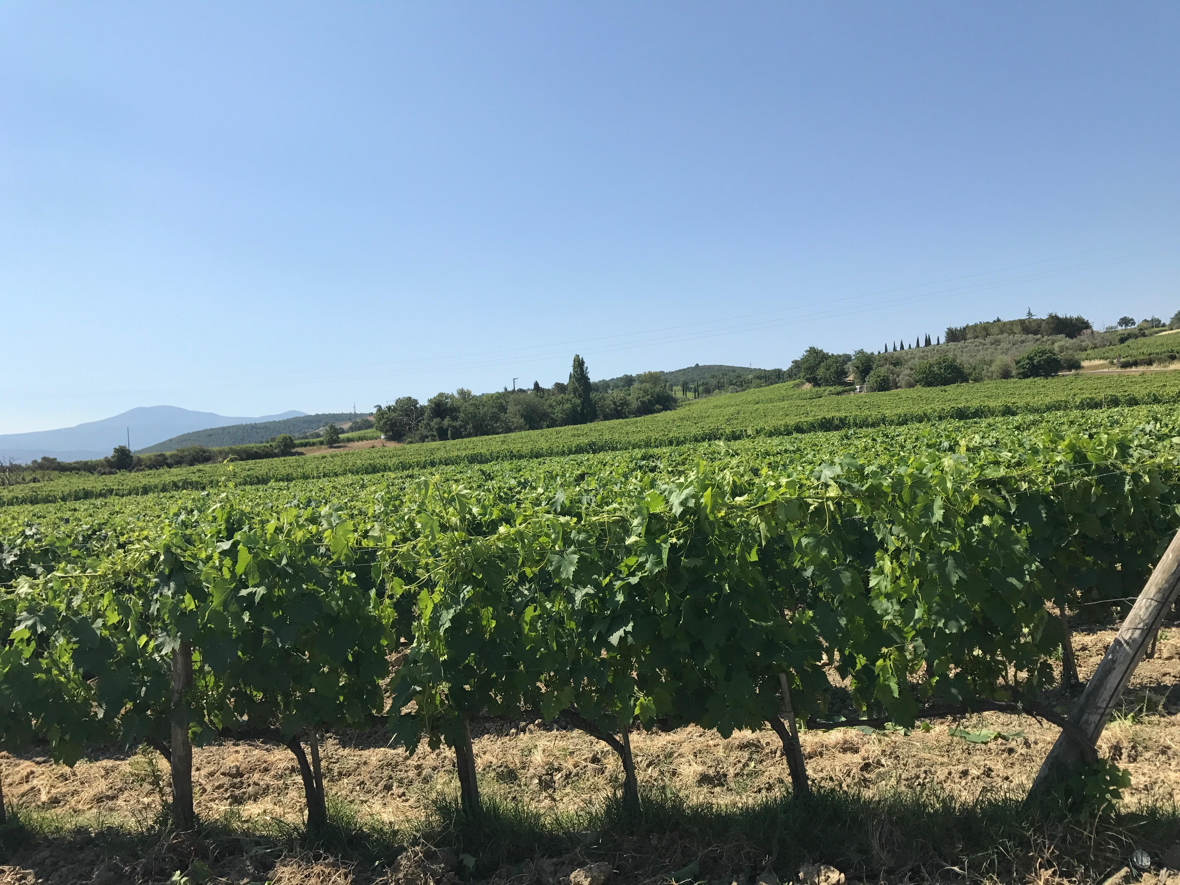 Casanova Di Neri - Brunello-vinmarken deres
