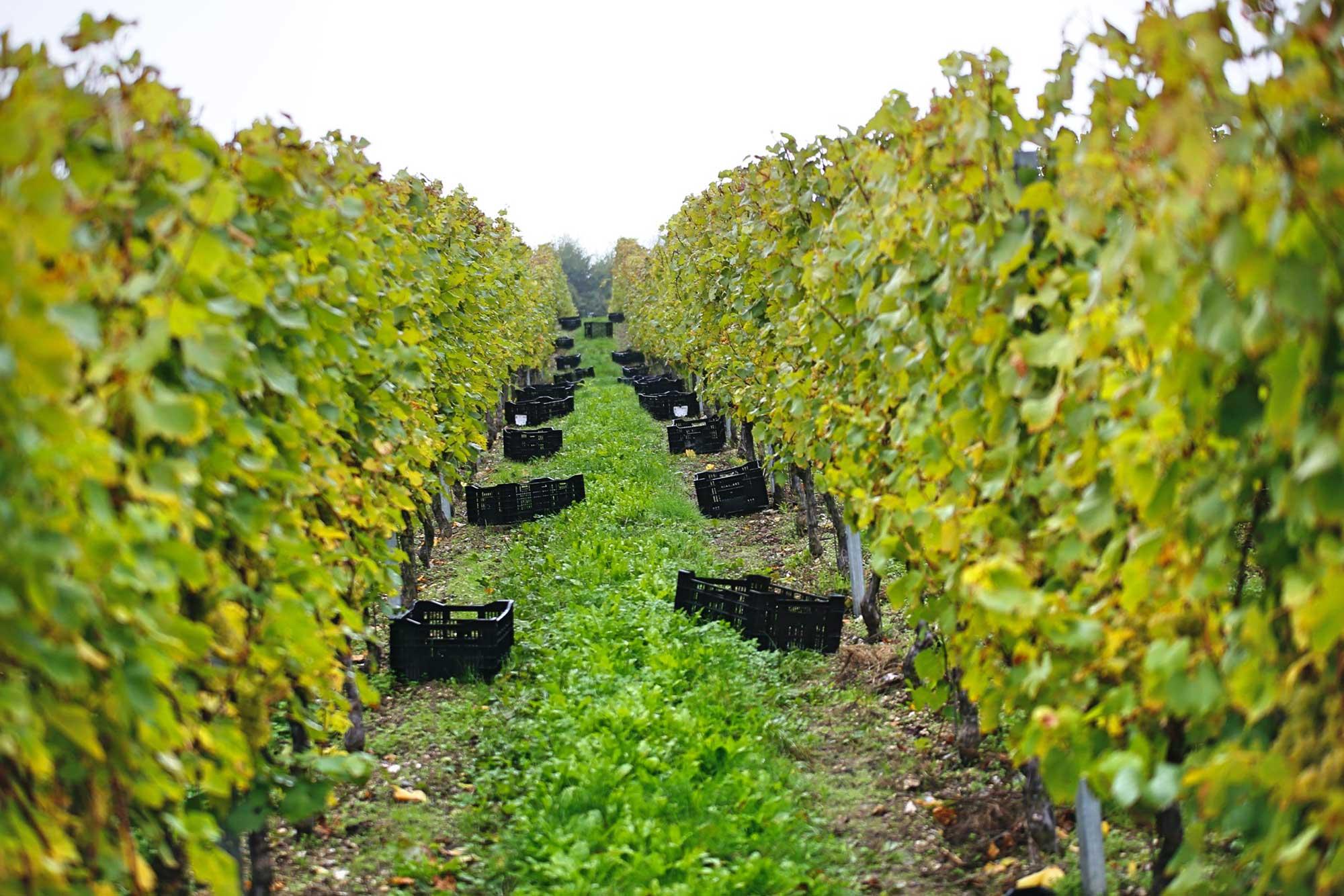 Spesiallansering britisk musserende, Champagne, Loire og Chablis – Juni 2020